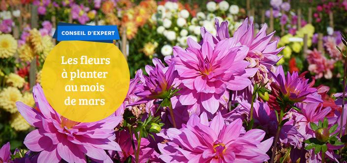 fleurs a planter en mars