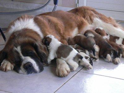 beethoven chien mort