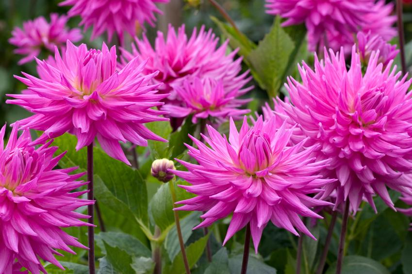 fleurs a bulbe