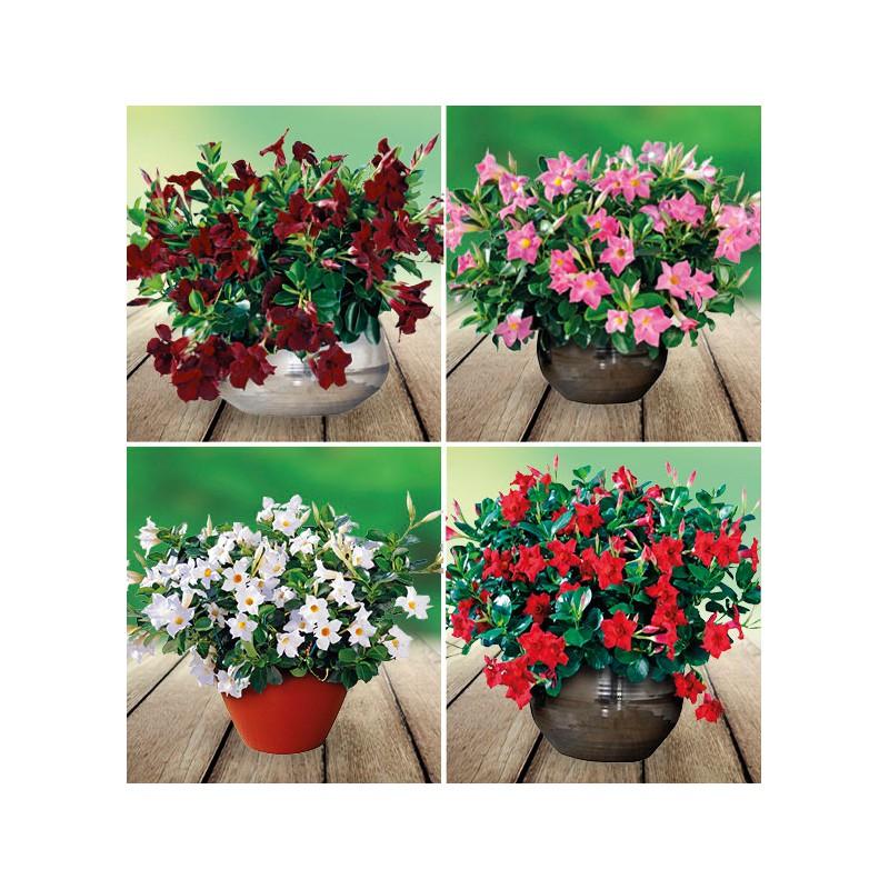 fleurs briant