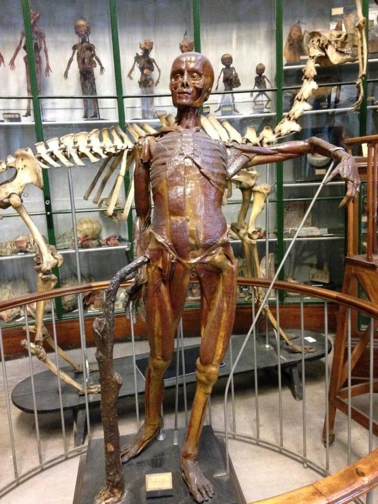 musée paris corps humain