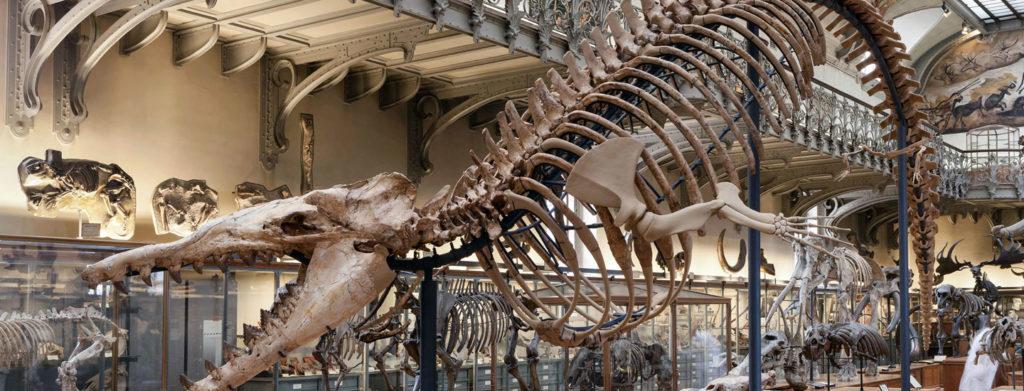 musée paris dinosaures